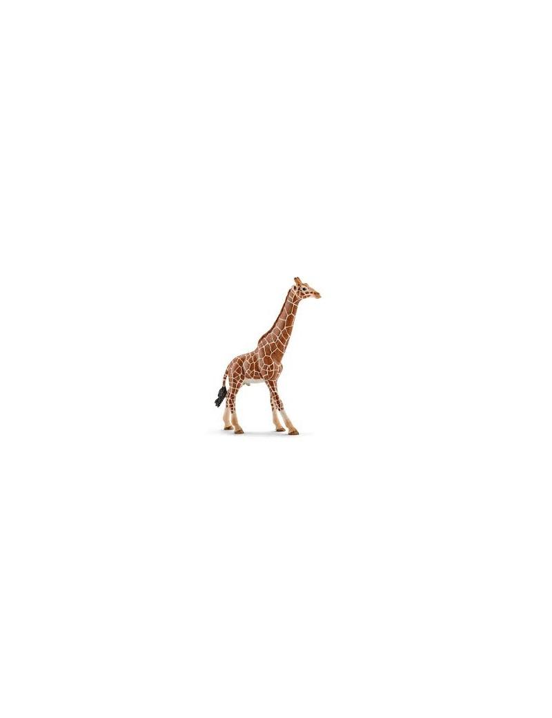 Girafe mâle - Figurine Animal - Schleich - Trésors d'Enfance à Rodez